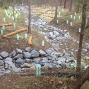 rock lined gully and revegetation