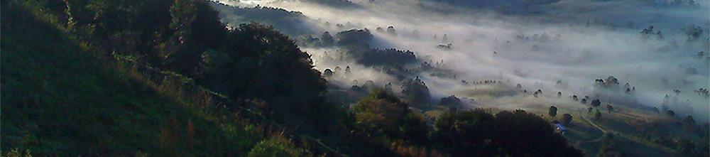 bushland landscape