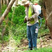 bushland regeneration3