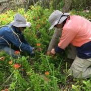 bushland regeneration8