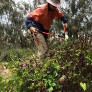 bushland regeneration9