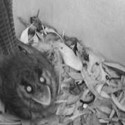 monitoring nesting box2