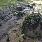 drain at Paradise Country