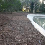 wetland after3