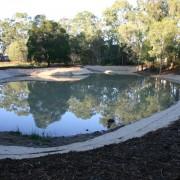 wetland after4