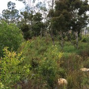 pre-treatment bushland