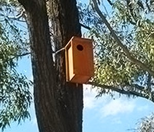 habitat box