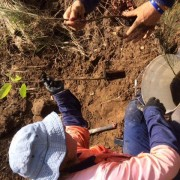 planting longstem species