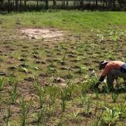 re-planting native vegetation