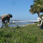 bushland regeneration11