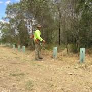 bushland regeneration12