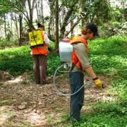 bushland regeneration4