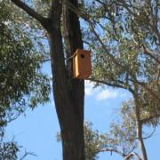 nesting box2
