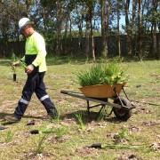 manual replanting