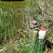 spray-wetland