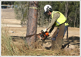 worker cutting down tree