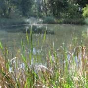 wetland before3