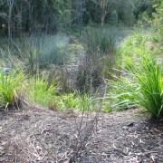 wetland before4