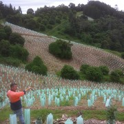 tree planting project Brisbane