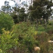 pre-treatment bushland