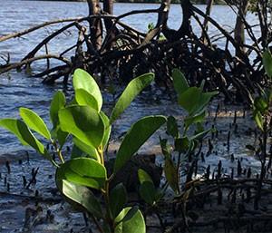 wetlands revegetation